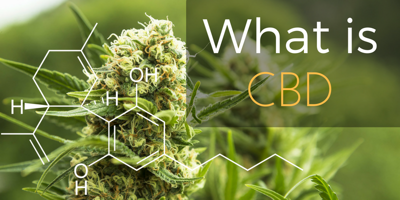 What is CBD? Commonly known as Cannabidiol
