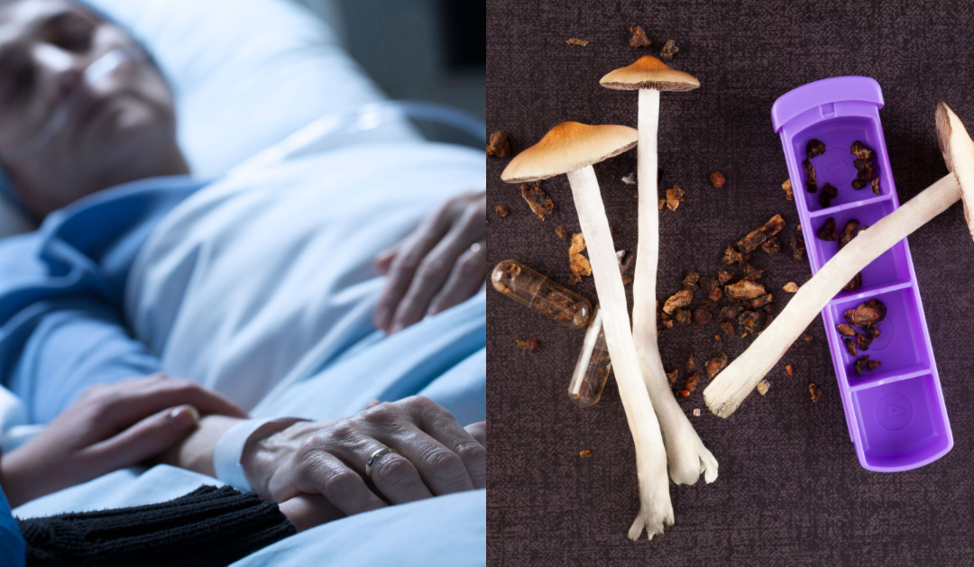 Scientists Suggest That Psychedelics Could Revive People From Vegetative States