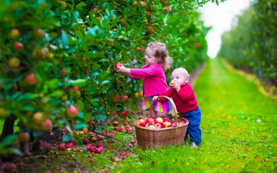 Scientists Put Family On Organic Diet & Witness A Dramatic Drop In Pesticide Levels