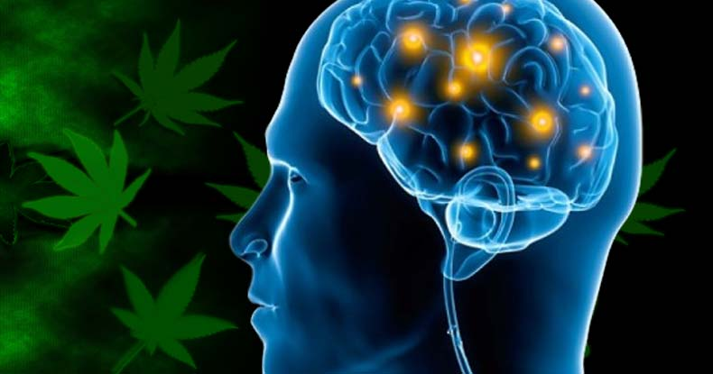 Another Study Shows How Cannabis Relieves Stress And Anxiety